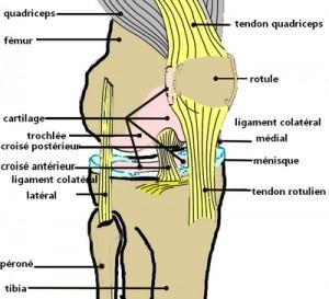 douleur genoux face interne